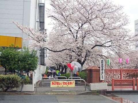 megurogawa02.jpg